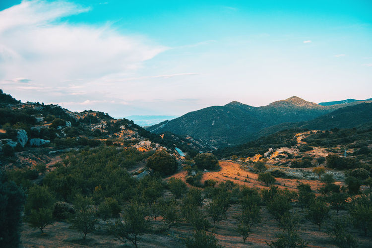 Landscape of the prades mountains, in tarragona, spain. a sunny summer day with green trees