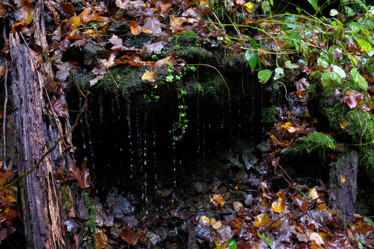 Drip Season Moss Close-up Beauty In Nature Fall Fall Beauty Autumn Autumn colors Autumn Leaves Fall Colors Dripping