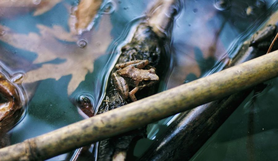 A frog in a lake from a high view