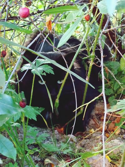 Summer Cat♡