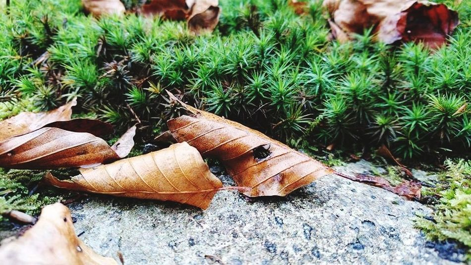 Day Outdoors High Angle View No People Nature Field Growth Grass Plant Close-up Leaf
