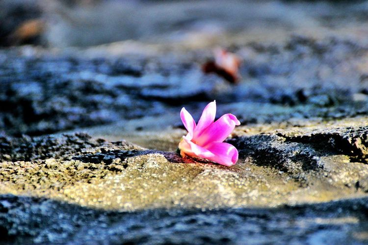 Close-up of pink flowers on beach