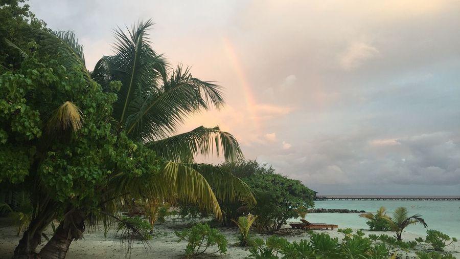 Rainbow🌈 Beach Maldives Palm First Eyeem Photo