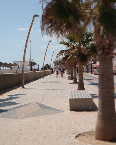 EyeEm Selects Tree Water Palm Tree Beach Sea Shadow Sand Summer Sky Date Palm Tree Shore