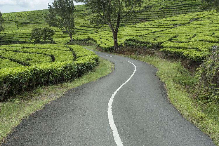 Road amidst field