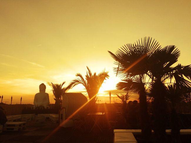 EyeEmNewHere Berlin Berlin Photography Schönhauser Allee Parkdeck Prenzlauerberg Sunset Strandbar Palm Tree Outdoors Silhouette Buddha Sky Beauty In Nature Clear Sky Magical Day Enjoy The Moment