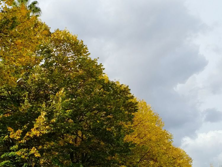 Tree Cloud - Sky Beauty In Nature Sky No People Arvore árvores Amarelo Verde Outono Outono Eyeem Europa Oficial© Outono2016 Nuvens Fall Colors Fall Fall Foliage Foliage