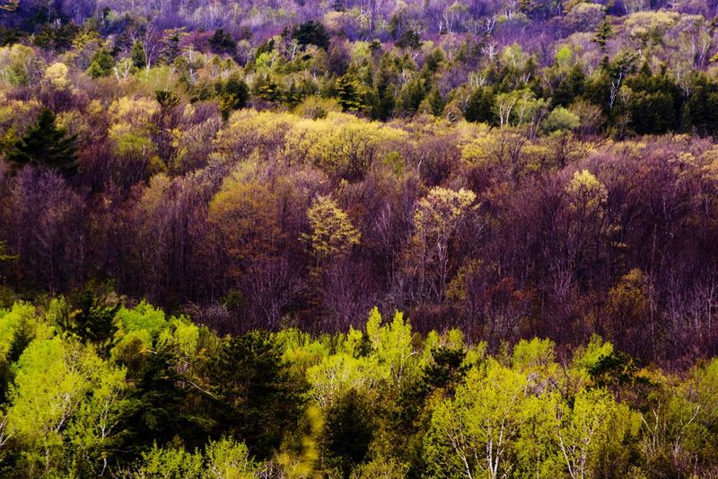 Door's County Color Of Life Nature The Magic Mission Foliage The Great Outdoors - 2017 EyeEm Awards
