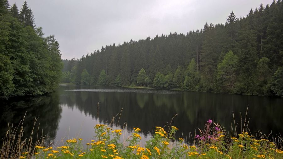 Scenic view of calm lake with trees reflection against sky