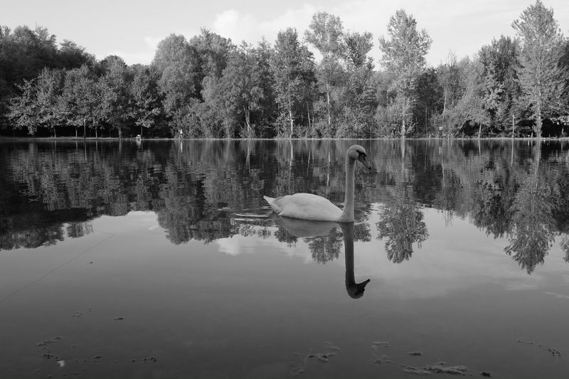 Been There. Reflection Tree Lake Water Outdoors No People Nature Beauty In Nature Day Sky Animal Themes Monochrome Photography Tranquility Fujifilm X-Pro1