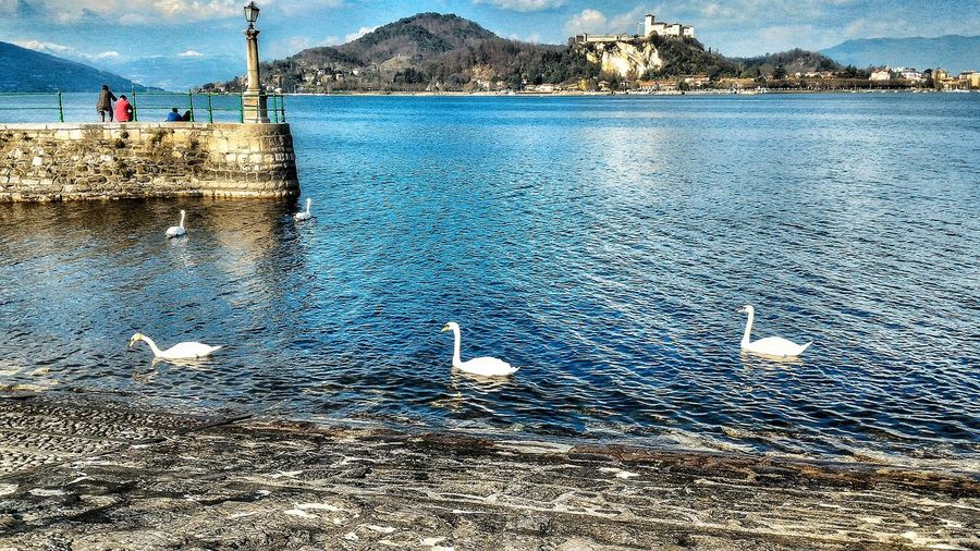 Novara Castle Of Angera Trees Panorama Lake Maggiore ❤️ Lake View Hopes And Dreams Italy Italian Holiday Arona Lake Swans Water
