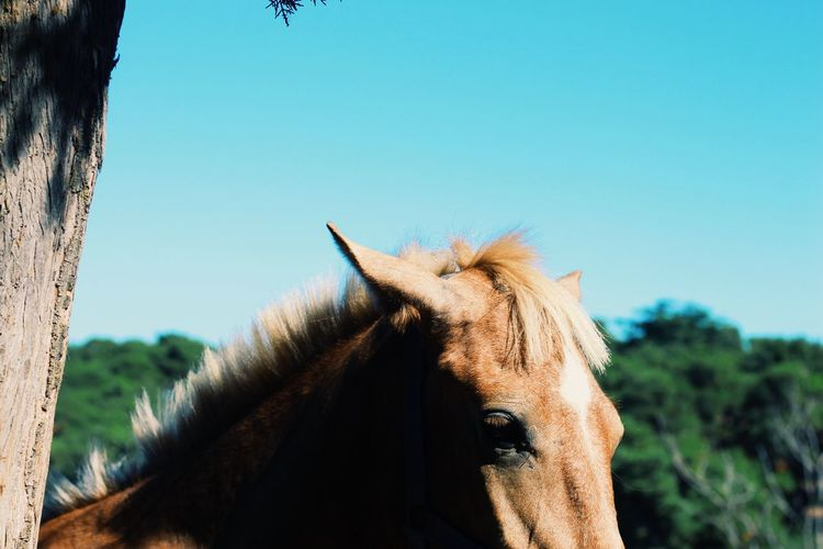 Close-up of horse in ranch against clear sky