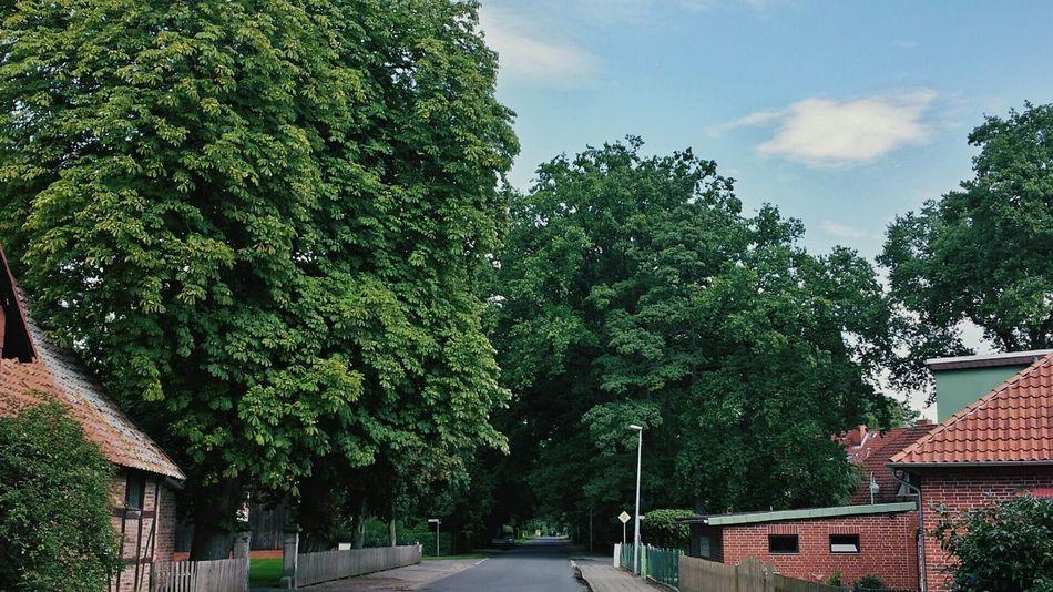 Tree Porn Ortsdurchfahrt Wennebostel Greenery Hugging A Tree Treetastic Trees Trees And Sky