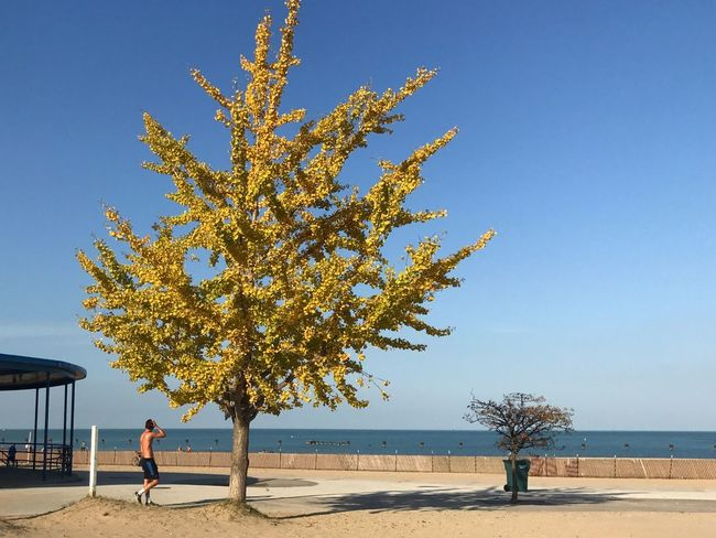 Real People Tree Nature Lifestyles Sunlight Beauty In Nature Clear Sky Scenics Leisure Activity Vacations Outdoors Men Tranquility Sky Lakefront Beach Water Off Season