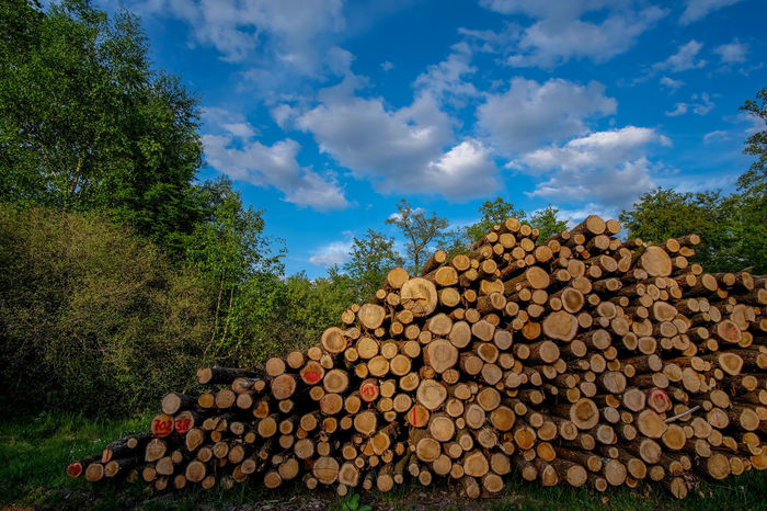 Baumstämme Hessen Germany Reinhardswald Rohstoff Wolkenhimmel Abundance Arrangement Cloud - Sky Day Deforestation Firewood Forestry Industry Forst Heap Holz Material Landscape Large Group Of Objects Log Lumber Industry Nature No People Outdoors Pile Sky Stack Timber Tree Wald Wood - Material Woodpile