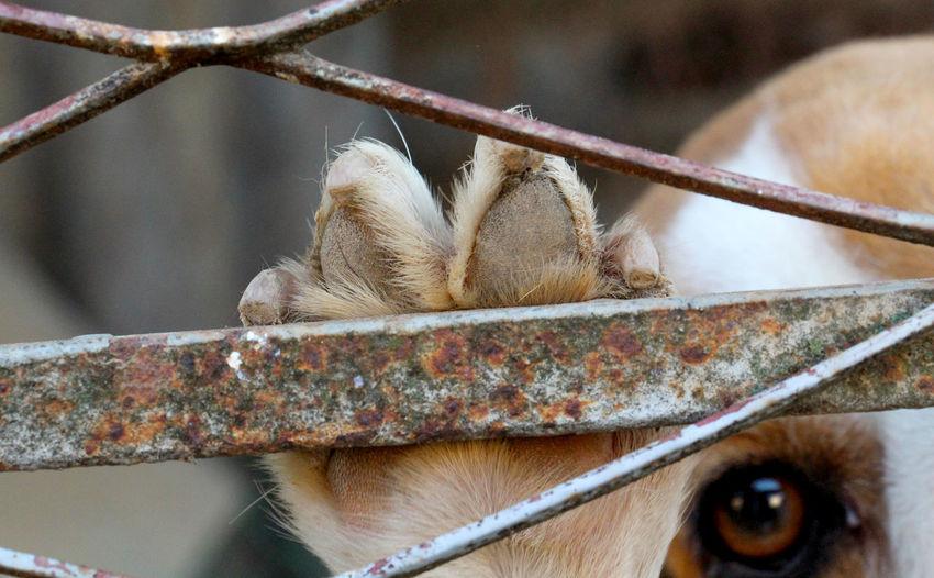 paw and sad eye Animal Themes Animal Wildlife Animals In The Wild Captive Captivity Close-up Day Dog Eye Dog Paw Domestic Animals Eye Freedom Mammal Monkey Nature No People One Animal Outdoors Paw Prison Rust Sadness Sorrow