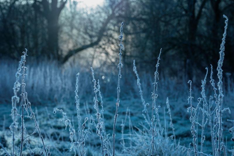Frozen water in forest