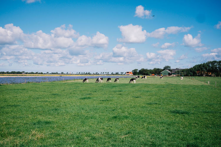 View of horses on field against sky