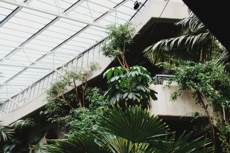 Greenhouse Growth Indoors  Nature Architecture Conservatory Built Structure