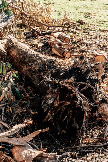 Land Forest Day Nature Tree Field Wood - Material No People Plant Plant Part Deforestation High Angle View Environmental Issues Dry Outdoors Leaf Sunlight Wood Close-up Falling Messy Bark Stick - Plant Part