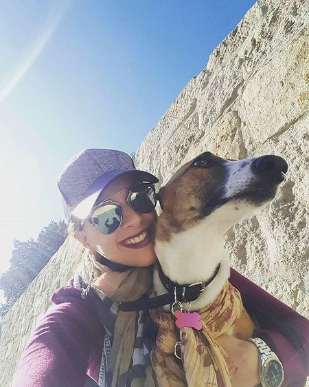 Sunny Sunday s 🐕🐾🌞 Greyhound Greyhounds Greyhoundsofinstagram Instagreyhounds Instagreyhound Poiseonthewall