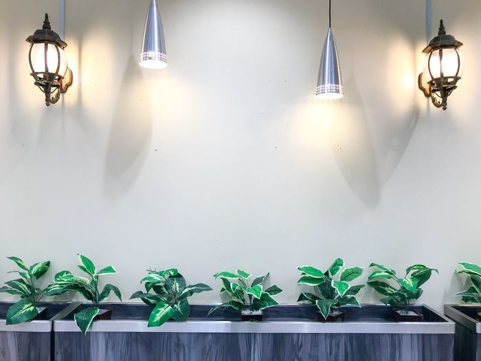 Old and new decoration lamp on the wall. Concept Design Interior Déco Wall Plant Potted Plant Wall - Building Feature Growth Nature No People Green Color Lighting Equipment Indoors  Decoration Side By Side Illuminated Hanging Leaf Day Arrangement Plant Part Architecture Choice Electric Lamp