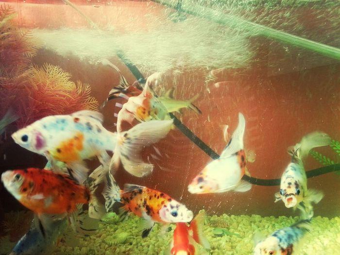 Taking Photos Fish Aquarium Colorful