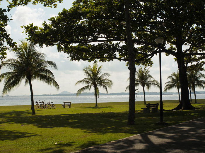 Nature Parks Park Green Beach Relax Unwind Nature Beauty Landscape Greenery Green Trees