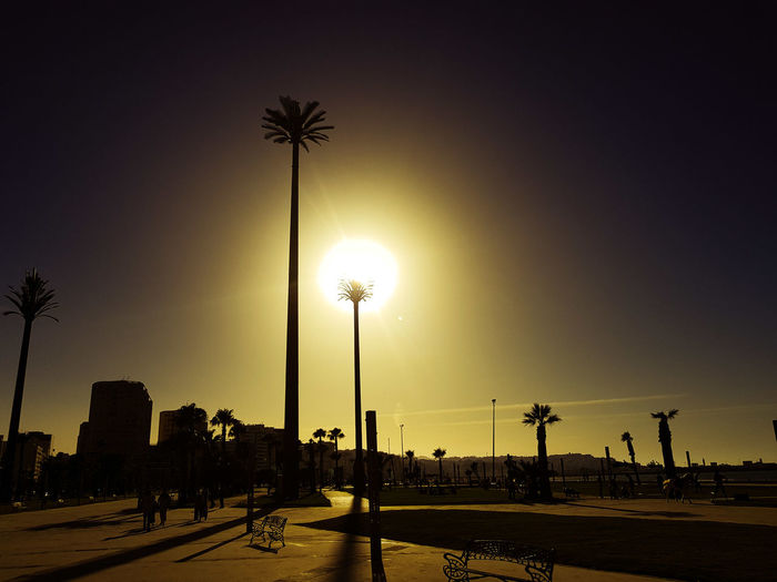 Silhouette of street light and palm trees against sky
