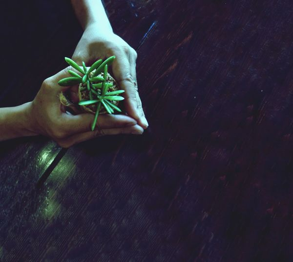 Cropped hands of woman holding plants at table
