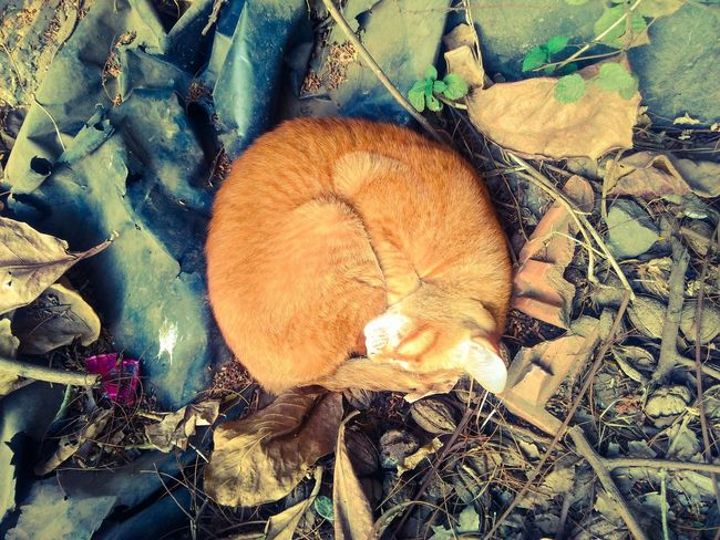 Sleeping Beauty Sleeping Beauty Cat Cat♡ Cat Lovers Cats Catsagram Cats Of EyeEm Catsofinstagram Cats 🐱 Vintage
