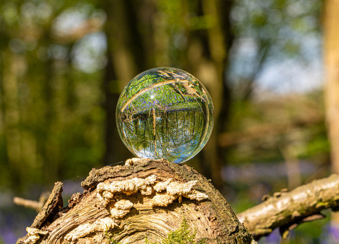 Close-up of bubble ball on tree