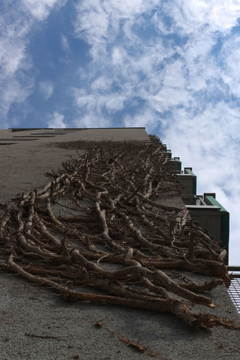 Low angle view of sculpture on wall against sky