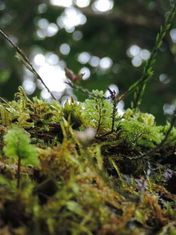 Nature Growth Green Color Outdoors Beauty In Nature Close-up No People Day Needle - Plant Part Plants Grass Mountains Asianbeauty Forest No Focus