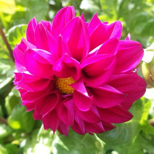 Vibrance is a strong feature Nature Flower Flowers