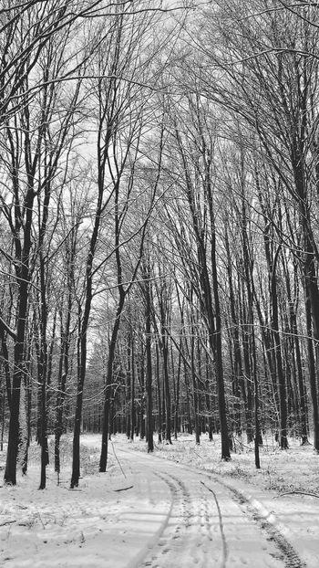 Zielony Las Blackandwhite Forest Nature Nature Photography Winter Smartphonephotography Tree Snow Naturelovers