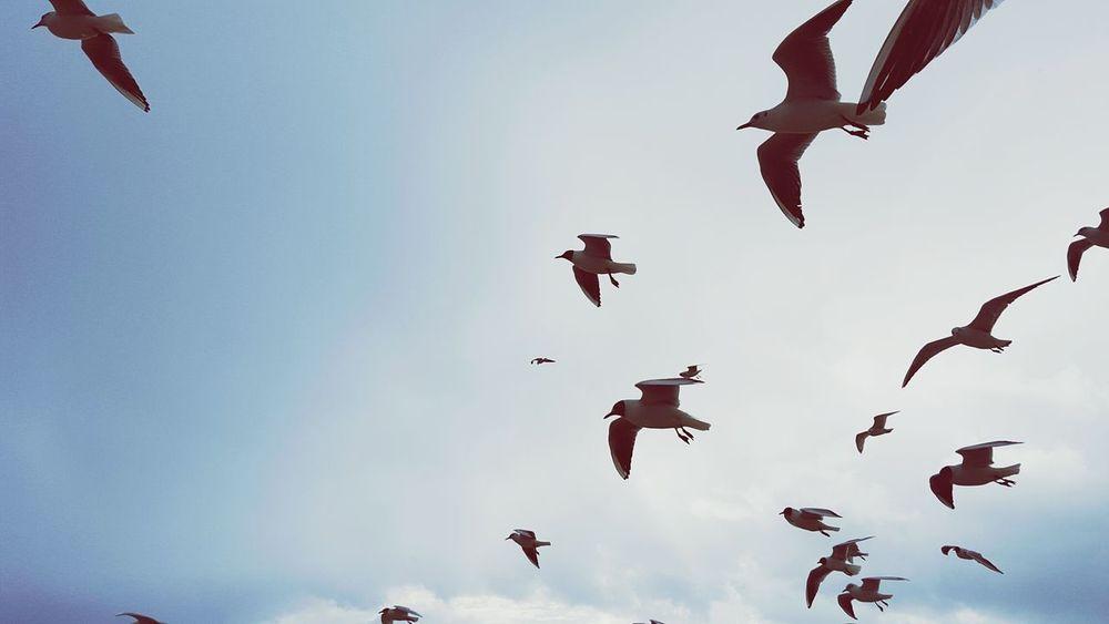 Nature Birdphotography Bird High Flying Fly Sky Sea Seagulls Birds Roadtrippin' Roadtrip Traveling Travel Wild Animals