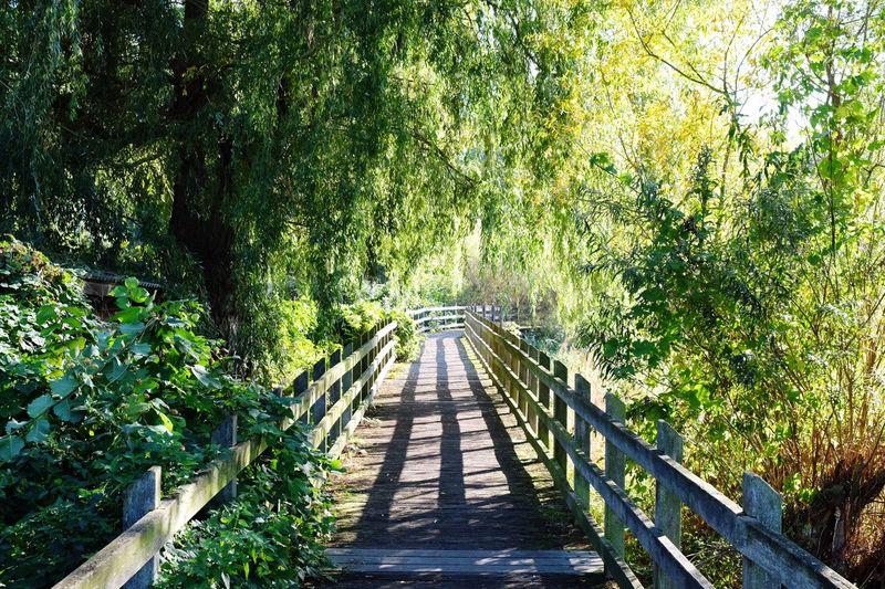 Narrow walkway in park