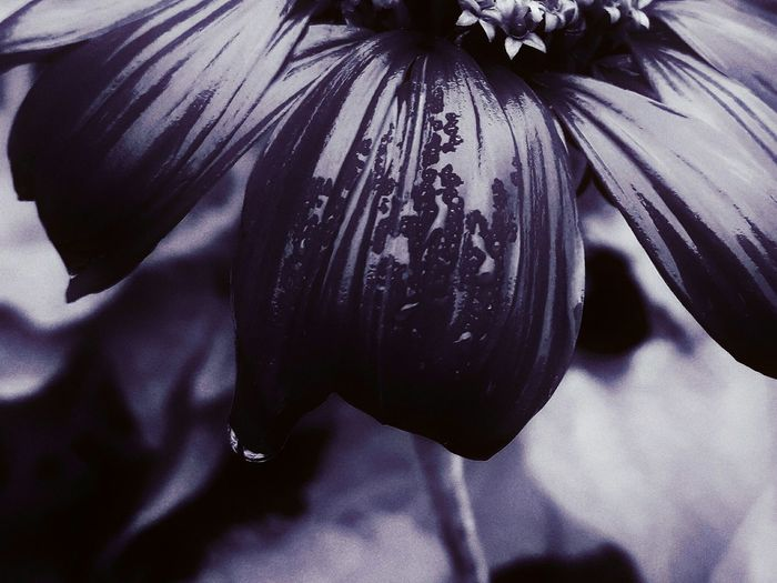 Flower Indoors  Textile One Person Adults Only Human Body Part People Close-up Adult Only Women Day Nature Nature Monochrome _ Collection Purple Beauty In Nature EyeEm Best Edits Mood Purpleflower