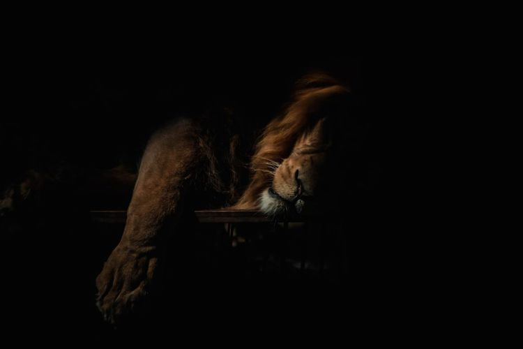 Cat sleeping in the dark