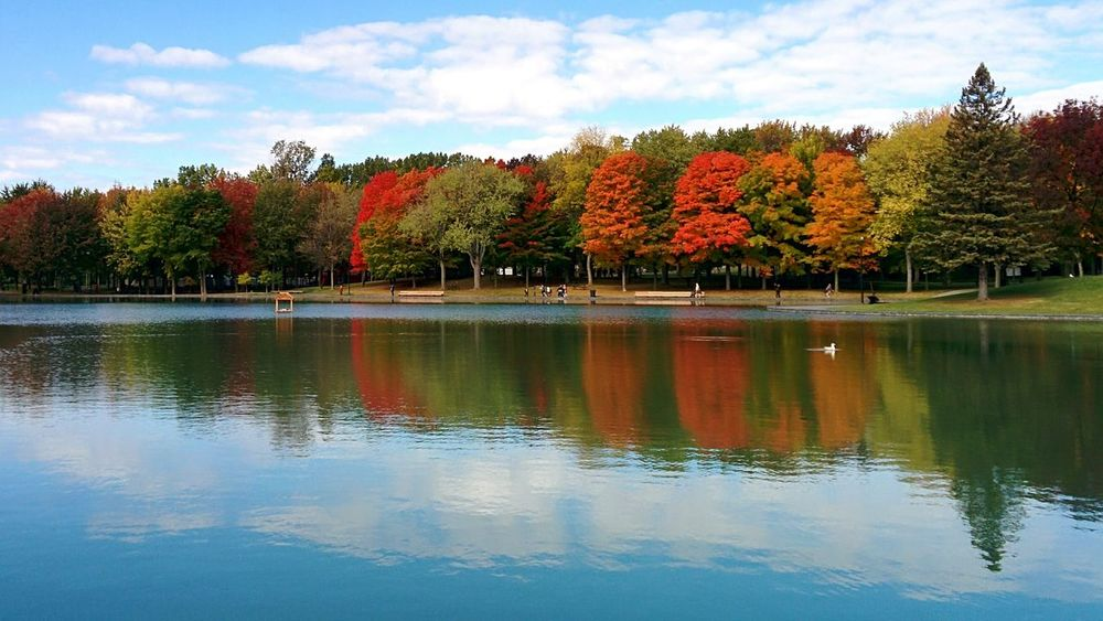 Canadian Lake Tree Reflection Sky Blue Water Travel Destinations Outdoors Flower Sport No People Nature Day
