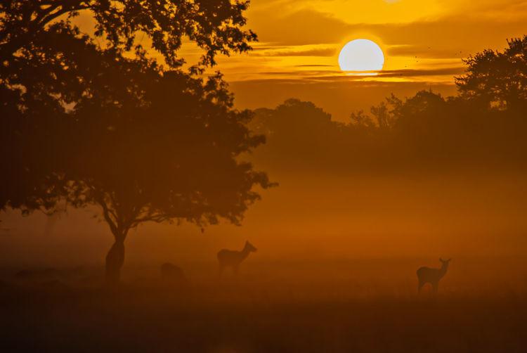 Silhouette of tree on field against orange sky
