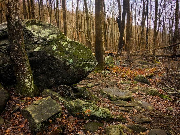 Rock in woods