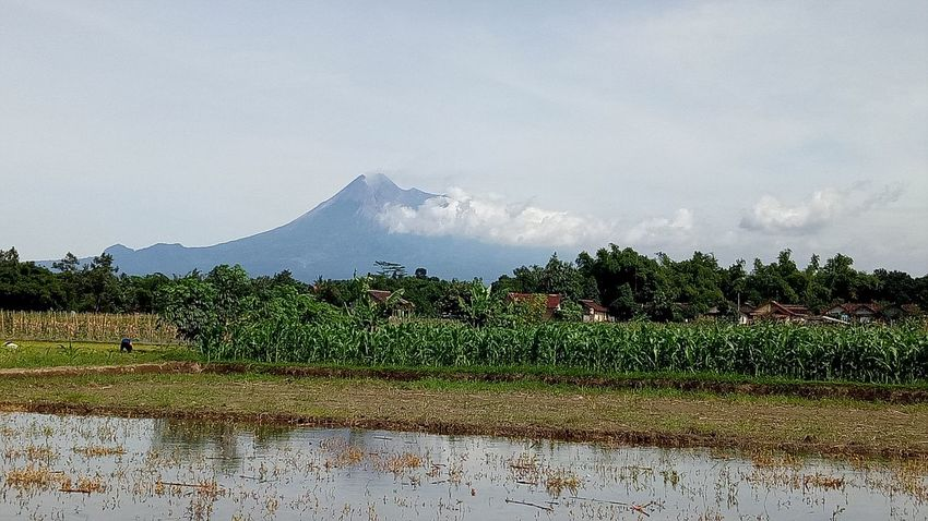 Merapi view Mountain View Outdoors Agriculture Day Nature Blue Sky Close-up EyeEm Best Shots Eyeam Select EyeAmNewHere EyeEmBestPics Eyeam Take Photo Tress Water Green Leaves