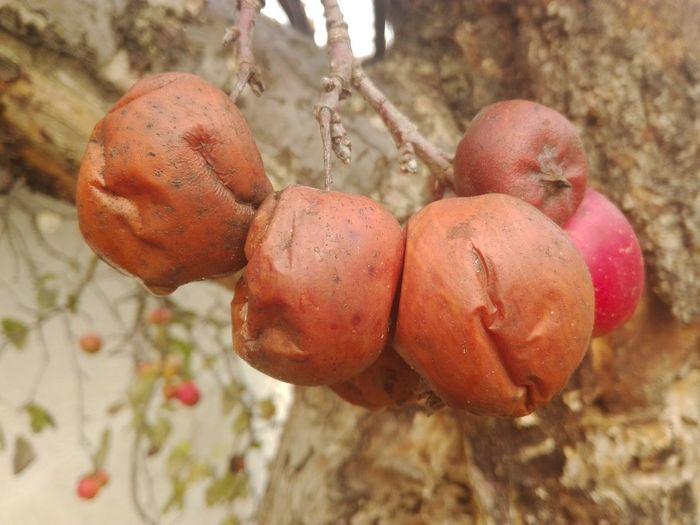 Alanlógiaia Aple Fruit No People Red Tree