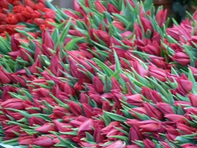 """They are leaning out for love"" Abundance Christmas Close-up Colorful Floral Flower For Sale Full Frame Leaning Market Market Nature No People Outdoors Pink Pink Color Pink Flowers Red Retail  Tulips"