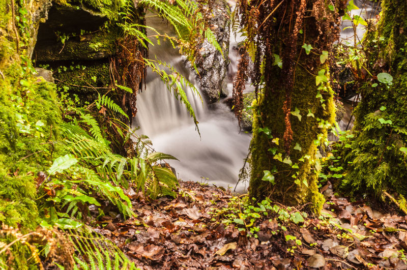 Beauty In Nature Day Forest Forest Photography Green Growth Leaf Long Exposure Motion Nature No People Outdoors Scenics Silk Effect Tree Water Waterfall Woods