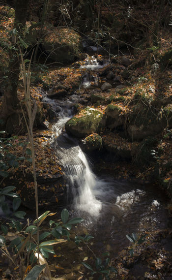 Autumn Beauty In Nature Flowing Water Forest Long Exposure Motion Outdoors Stream - Flowing Water