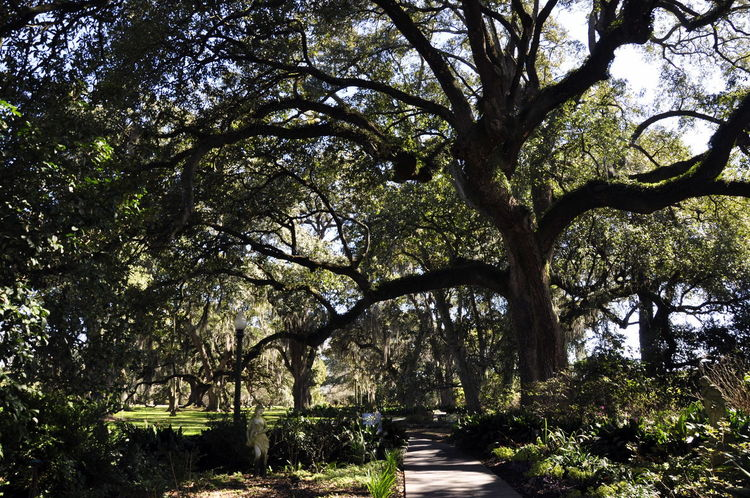 Day Garden Houmas House New Orleans No People Outdoors Tranquility Tree