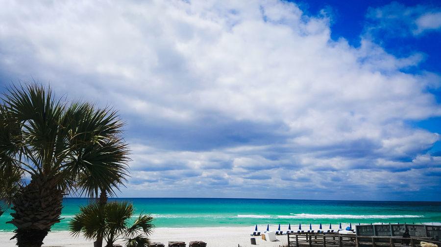 Tree Water Sea Palm Tree Beach Sand Beauty Summer Blue Relaxation Wave Seascape Coastline Shore Ocean Tropical Tree